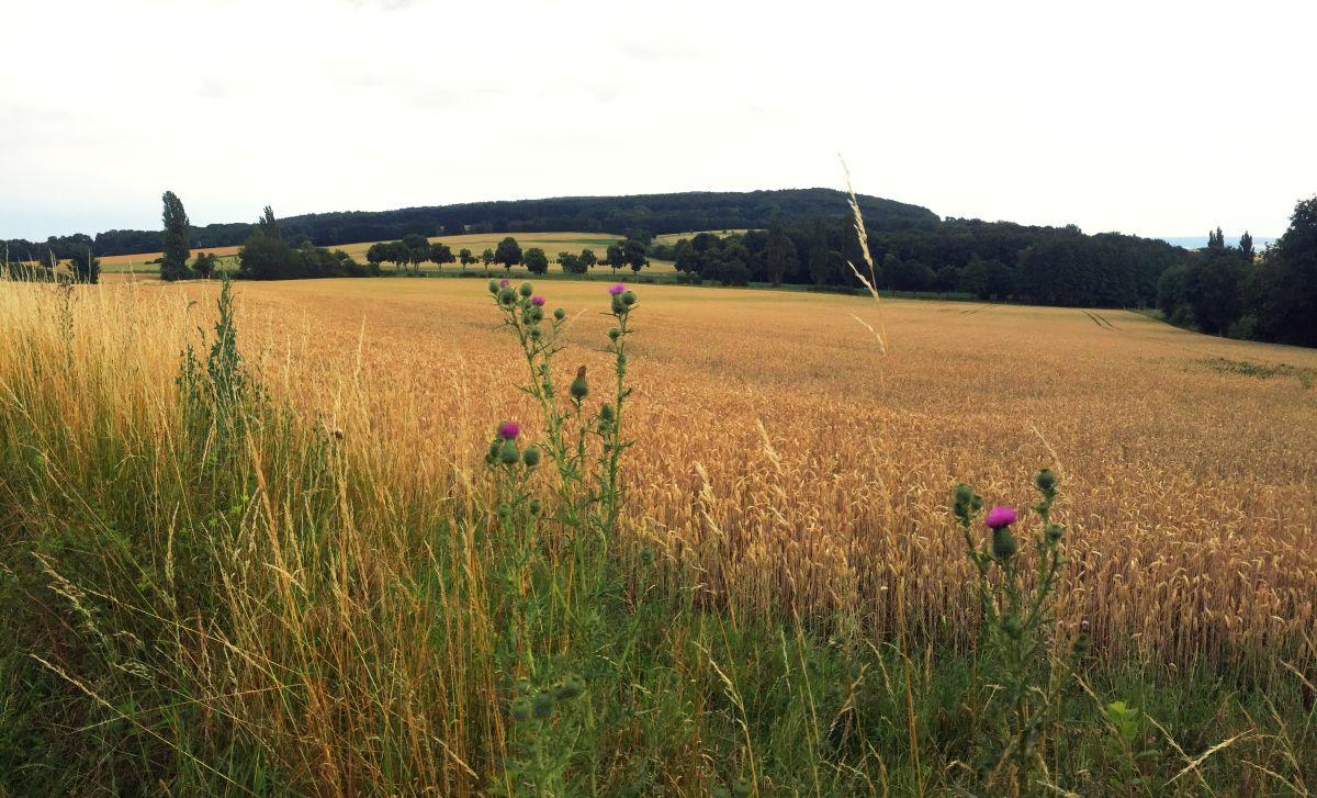 GRÜNE fordern: Keine Fabrik im Landschaftsschutzgebiet am Deister