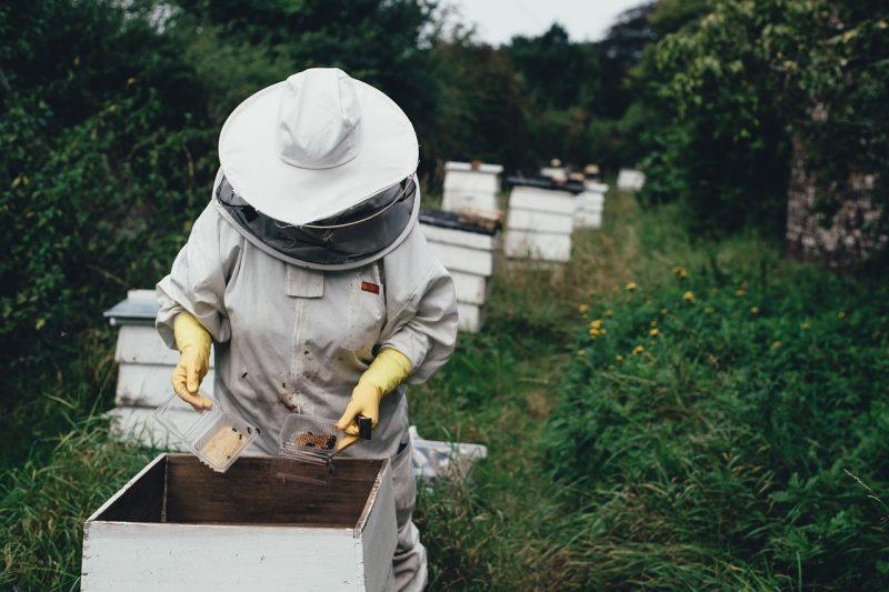 Apiary Bee Bee Farm Beehive  - Pexels / Pixabay