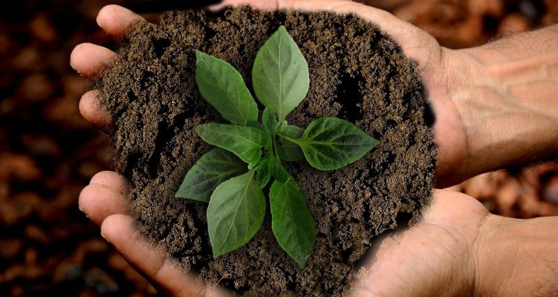 Earth Scion Leaf Sustainability  - anncapictures / Pixabay