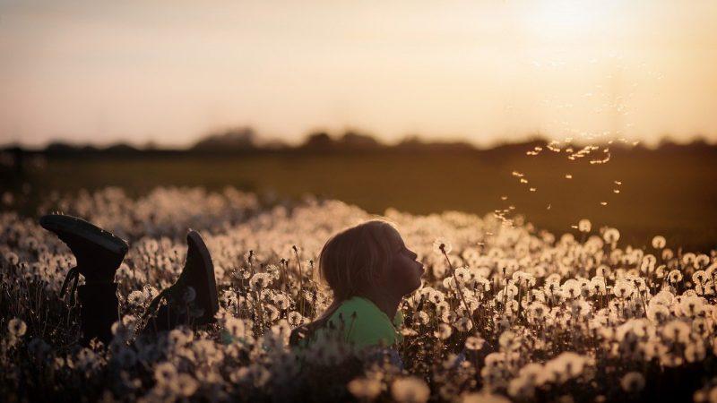 Flowers Child Girl Dandelion Field  - jplenio / Pixabay