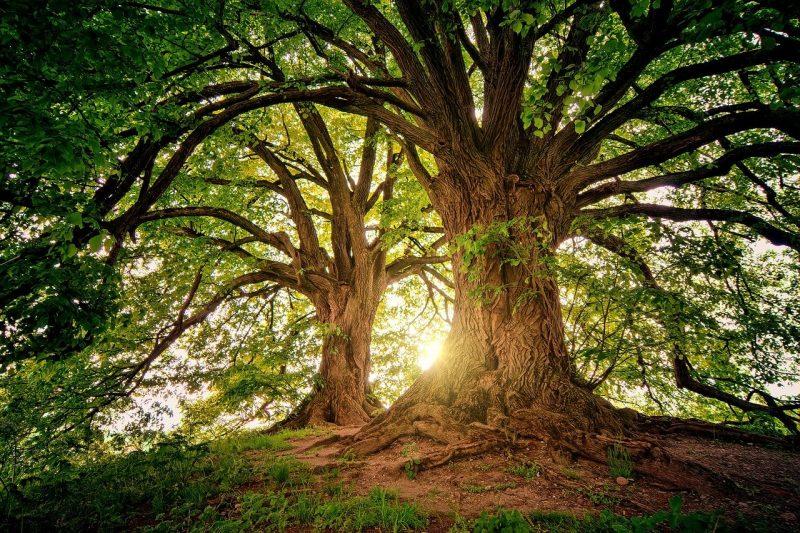 Trees Wilderness Nature Woods  - jplenio / Pixabay
